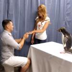 A Penguin Proposal