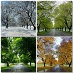 How to Propose Locally (Seasonal Ideas)