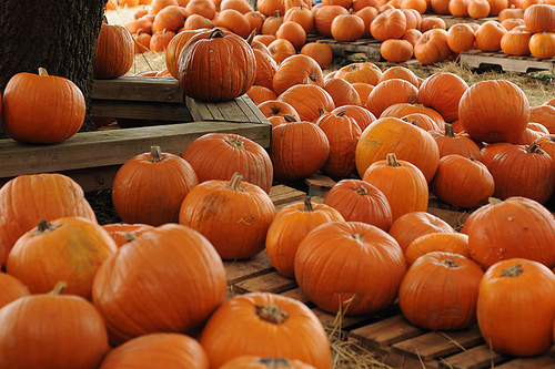 Pumpkin Patch Proposal Ideas