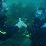 An Amazing Underwater Proposal
