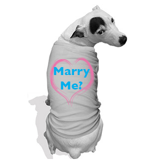 marry me dog outfit